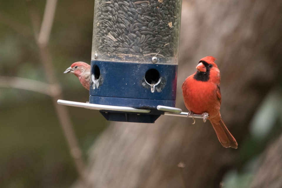 Cardinal & Finch