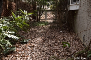 Leaf litter houses bugs for bird food