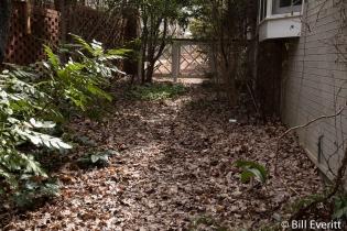 Leaf litter houses bugs for bird food