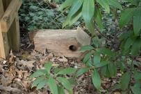 A broken cedar bird house left on its side is good shelter.
