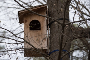 Barred Owl house