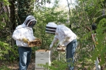 Bee Keepers Anne and Randall