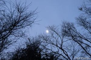 Moon Rise in Buckhead