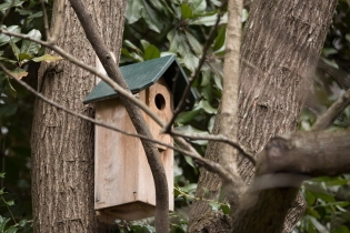 Northern Flicker house