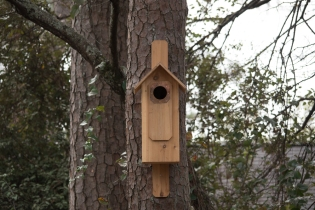 Pileated Woodpecker house