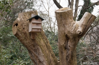 Snag is home for birds and insects