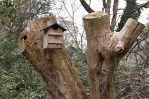 Screech Owl House