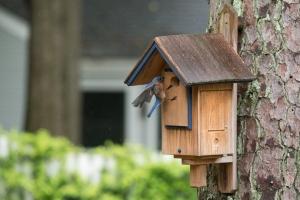Eastern Bluebird house