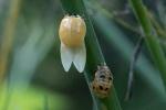Ladybug New Adult