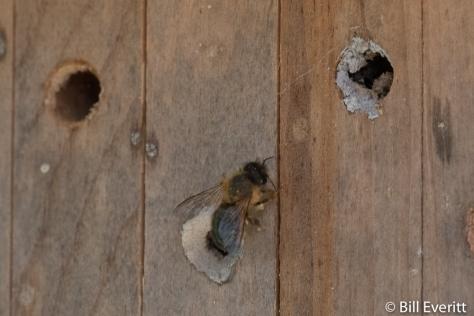 Native Bee Box