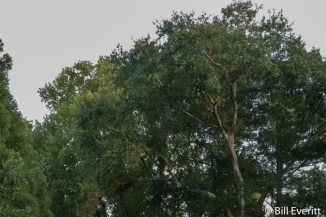 Canopy from a distance