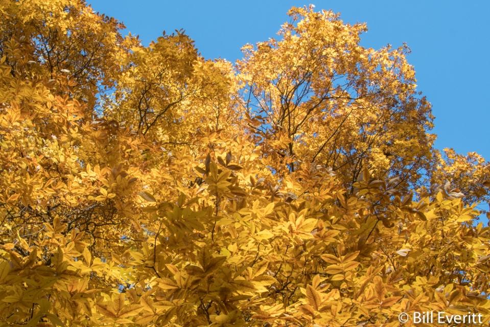 Peachtree Park Fall - 2016