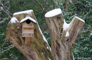 Screech-Owl Box