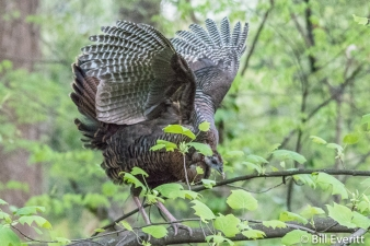 Wild Turkey Peachtree Park - April 7, 2017